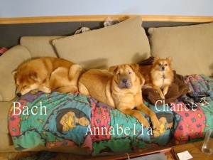 Bach, Annabella, & Chance