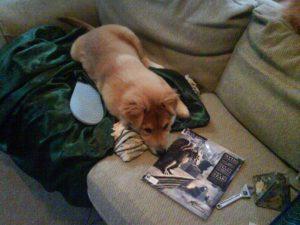 Bach pup